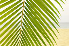 Folha de palmeira na praia Fotos de Stock