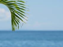 Folha de palmeira no fundo borrado Imagens de Stock