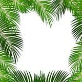 Folha de palmeira no fundo branco com lugar para sua ilustração do vetor do texto Fotografia de Stock