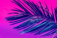 Folha de palmeira plúmeo pontudo no fundo cor-de-rosa violeta roxo do duotone Cores de n?on na moda toned Estilo minimalista imagem de stock royalty free