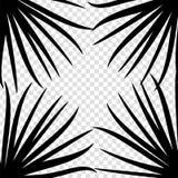 Folha de palmeira preta no fundo branco Ilustração do vetor Imagens de Stock