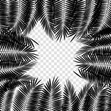 Folha de palmeira preta no fundo branco Ilustração do vetor Foto de Stock Royalty Free