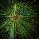 Folha de palmeira tropical imagem de stock