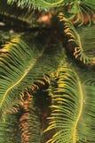 Folha de palmeira tropical da floresta úmida Imagens de Stock