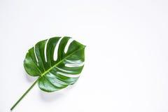 Folha de palmeira tropical isolada Imagens de Stock Royalty Free