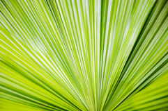 Folha de palmeira verde imagem de stock