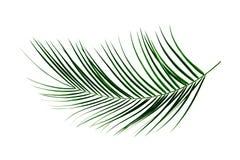 Folha de palmeira Imagens de Stock