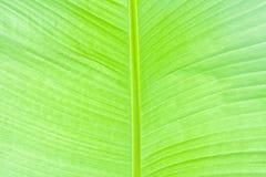 Folha de palmeira verde luxúria Fotos de Stock Royalty Free