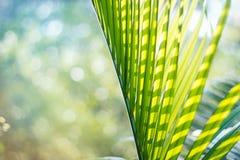 Folha de palmeira verde no fundo colorido do verão imagens de stock