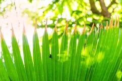 Folha de palmeira verde sob uma árvore grande Fotografia de Stock