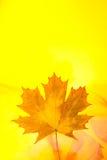 Folha de plátano Imagens de Stock Royalty Free