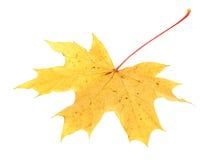 Folha de plátano amarela do outono Foto de Stock