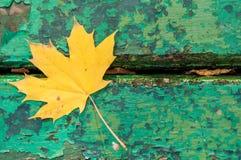 Folha de plátano do outono Imagem de Stock