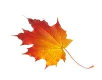 Folha de plátano do outono isolada no branco Imagens de Stock