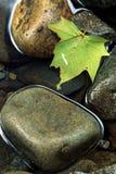 Folha de plátano e rochas na água imóvel Imagem de Stock