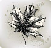 Folha de plátano, mão-desenho. Ilustração do vetor. Foto de Stock Royalty Free