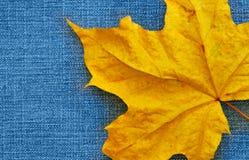 Folha de plátano sobre calças de brim Imagem de Stock