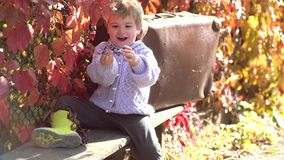 Folha de queda Criança bonito que senta-se nas folhas caídas outono em um parque Jogo das crian?as no parque do outono bebê feliz video estoque