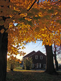 Folha de queda de Nova Inglaterra Foto de Stock Royalty Free