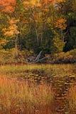 Folha de queda de Nova Inglaterra Fotos de Stock