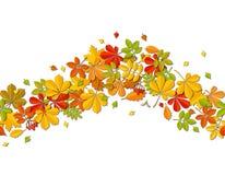 Folha de queda do outono sem emenda da beira no fundo branco Imagem de Stock