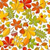 Folha de queda do outono sem emenda do teste padrão isolada no fundo branco Fotografia de Stock