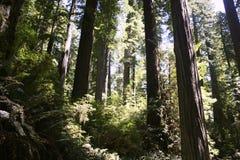 Folha de queda em Yosemite Imagem de Stock Royalty Free
