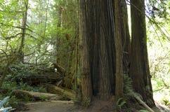 Folha de queda em Yosemite Imagem de Stock