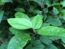Folha de uma flor Fotos de Stock