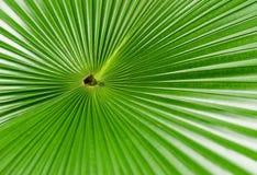 Folha de uma palmeira. Fotos de Stock
