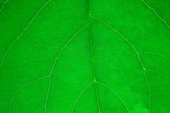 Folha de uma planta Fotografia de Stock