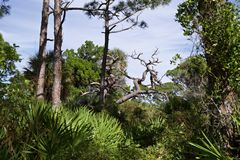 Folha densa com uma árvore inoperante fotografia de stock royalty free