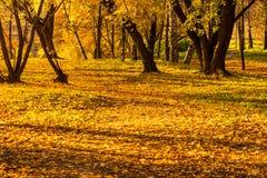 Folha do amarelo do parque do outono Imagens de Stock Royalty Free