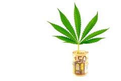 Folha do cânhamo no rolo de euro- contas no branco Imagens de Stock