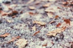 Folha do carvalho amarelo do outono na terra coberta com a neve naughty fotos de stock