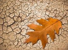 Folha do carvalho em terra rachada Fotos de Stock
