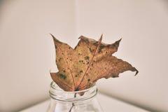 Folha do carvalho do outono em um prato de vidro que está em uma tabela branca imagem de stock royalty free