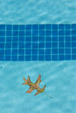 Folha do carvalho que flutua na associação Imagem de Stock