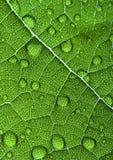 Folha do close up Imagens de Stock