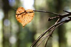 Folha do coração Foto de Stock