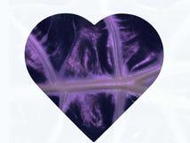 Folha do coração Imagens de Stock