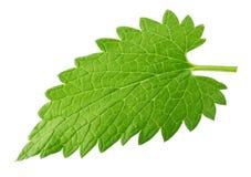 Folha do melissa do erva-cidreira isolada no branco fotografia de stock royalty free