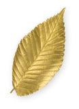 Folha do olmo do ouro foto de stock royalty free