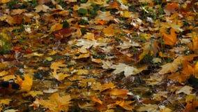 Folha do outono video estoque