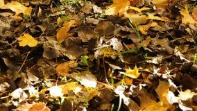 Folha do outono vídeos de arquivo