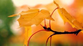A folha do outono video estoque