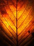 Folha do outono   imagens de stock royalty free