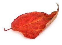 Folha do outono foto de stock