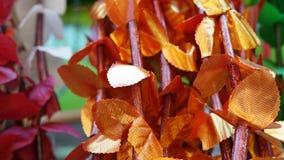Folha do outono Fotografia de Stock Royalty Free