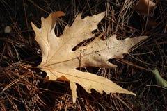 A folha do outono caiu na floresta Fotos de Stock Royalty Free